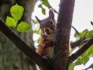 Diese Eichhörnchendame