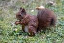 Diese sehr anhängliche Eichhörnchendame