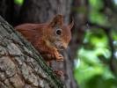 Eichhörnchen......