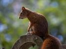 Eichhörnchen.....