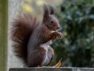 Eichhörnchen haben an jeder Hand