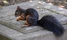 Er ist das schönste Eichhörnchen  auf dem  Friedhof