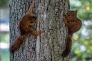In dem Baum haben sich Käfer versteckt