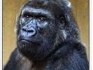 Massa aus dem Zoo Krefeld