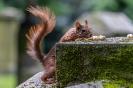 Meine Hörnchen haben wenigstens Tischmanieren