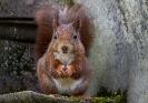 Sie hält sich für die Eichhörnchenkönigin, die Handhaltung hat sie sich bei der Merkel abgeguckt
