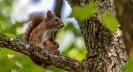 Wer den ganzen Tag auf dem Nussbaum herumklettert