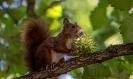 Wer derzeit Eichhörnchen fotografieren will