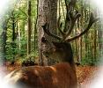 Wild in Hellenthal