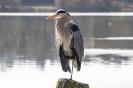 An dieser Stelle wartet er jeden Morgen auf die Angler