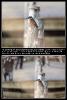 Der Eisvogel