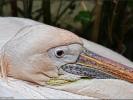 Der Wasservogel