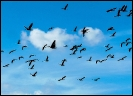 Die Vögel von Hitchcock