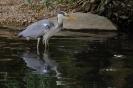Er hat heute den Eisvogel vertreten