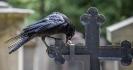 Erdnuss Akrobatik auf dem Grabkreuz