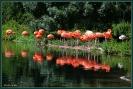 Siesta bei Familie Flamingo im