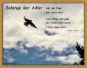 Flieg Adler flieg