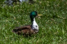 He Du....haste Enten futter dabei?