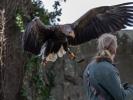 Hier landet der Adler