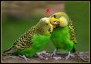 Liebe ist was schönes