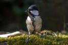 Mit Jungvögeln kann man derzeit sehr viel Spaß haben denn die sind noch so richtig neugierig