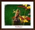 Nestbauer