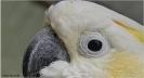 Papageien Portrait