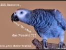 Vorwitziger Vogel