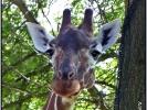 Karsruher Zoo